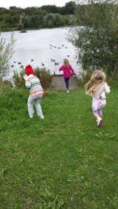 Running to the ducks